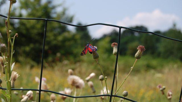 wolowice-przyroda-lipiec-2010-022
