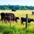 Przedsiębiorczość na obszarach wiejskich