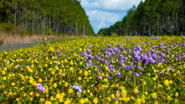 Wild Flowers, sxc.hu Uploaded by jaleainc